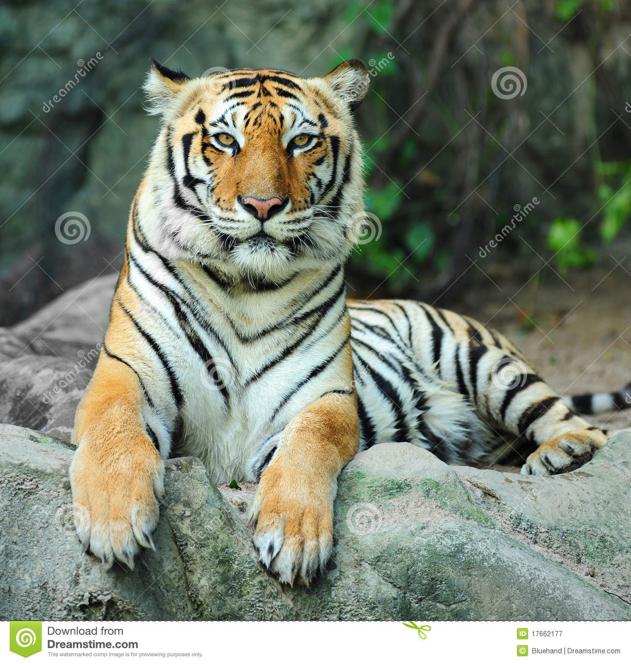 Tiger Facts For Kids – Interesting Facts About Tigers For Kids