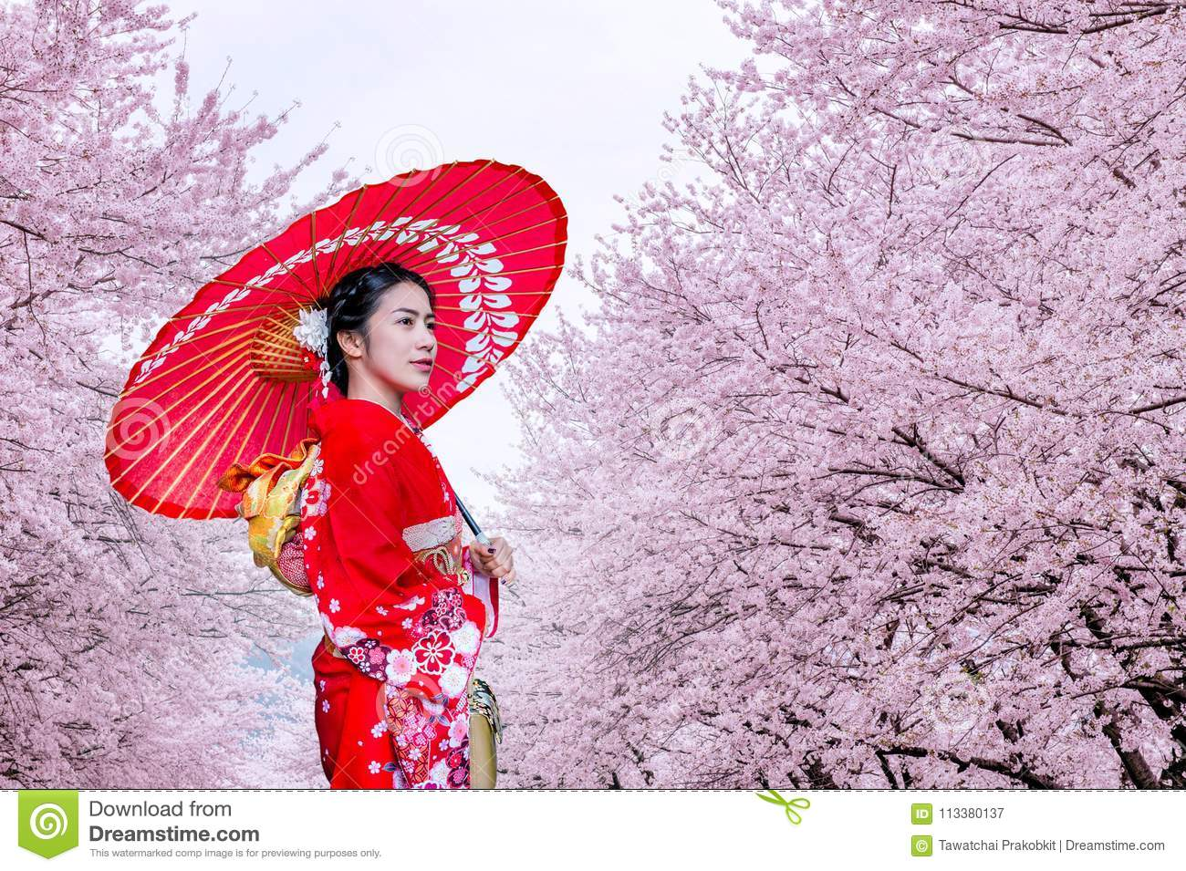 Asian woman wearing japanese traditional kimono and cherry blossom in spring, Japan