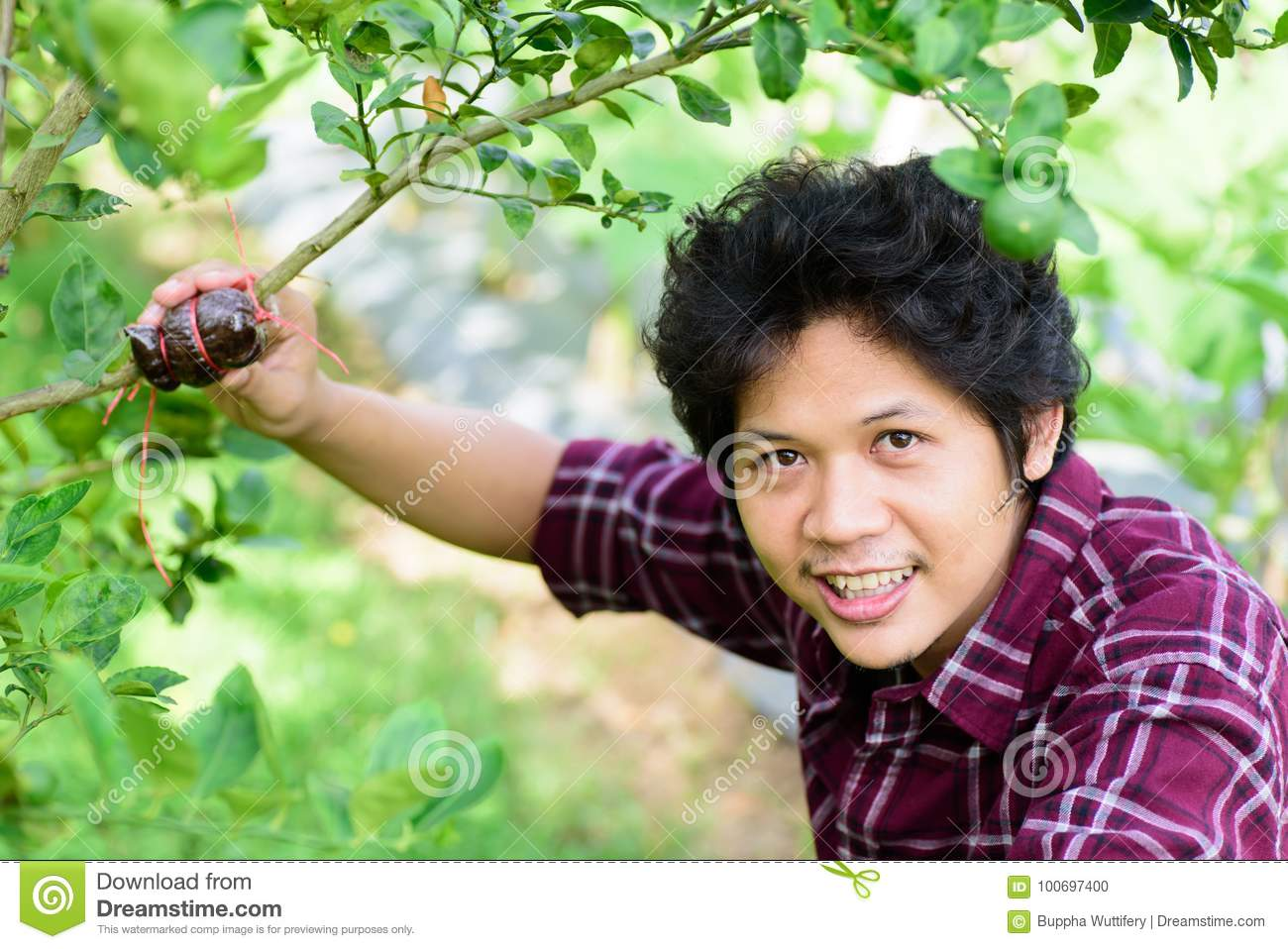 Asian young farmer grafting on lime tree