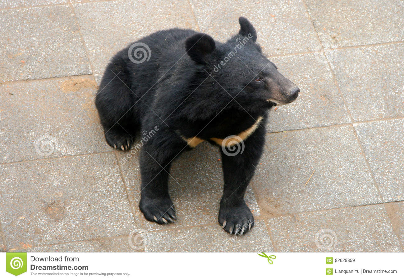 Are right. hairy bear thumbs