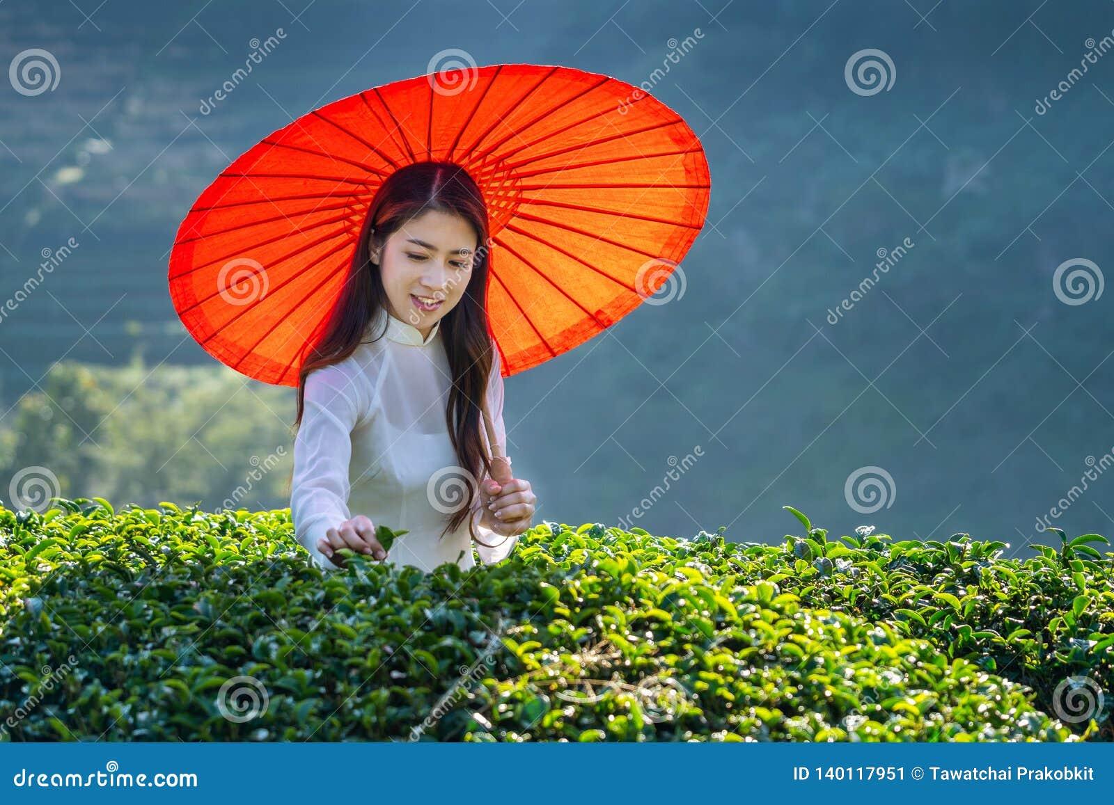 Asiatisk kvinna som bär Vietnam kultur som är traditionell i fält för grönt te