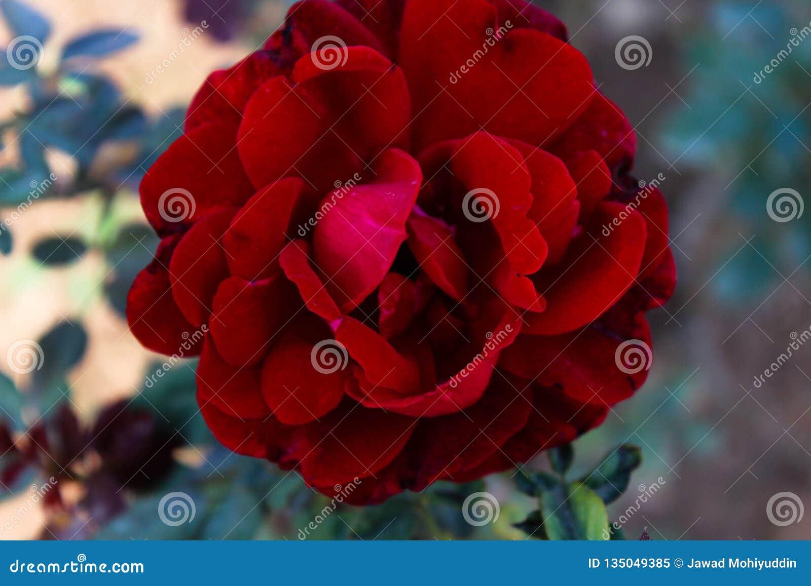 Asiatisk röd blomma