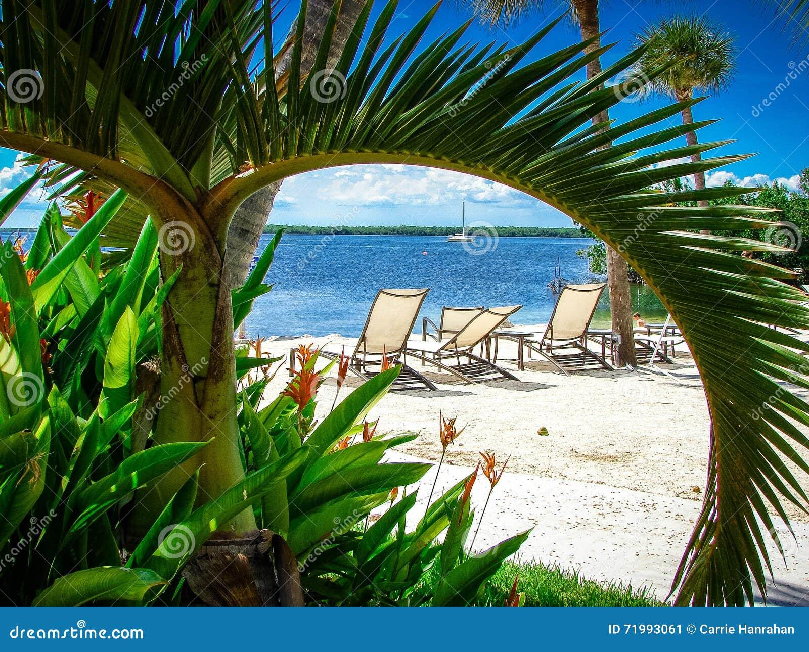 Asiento Tropical En Una Playa Enmarcada Por Una Palma Verde ...