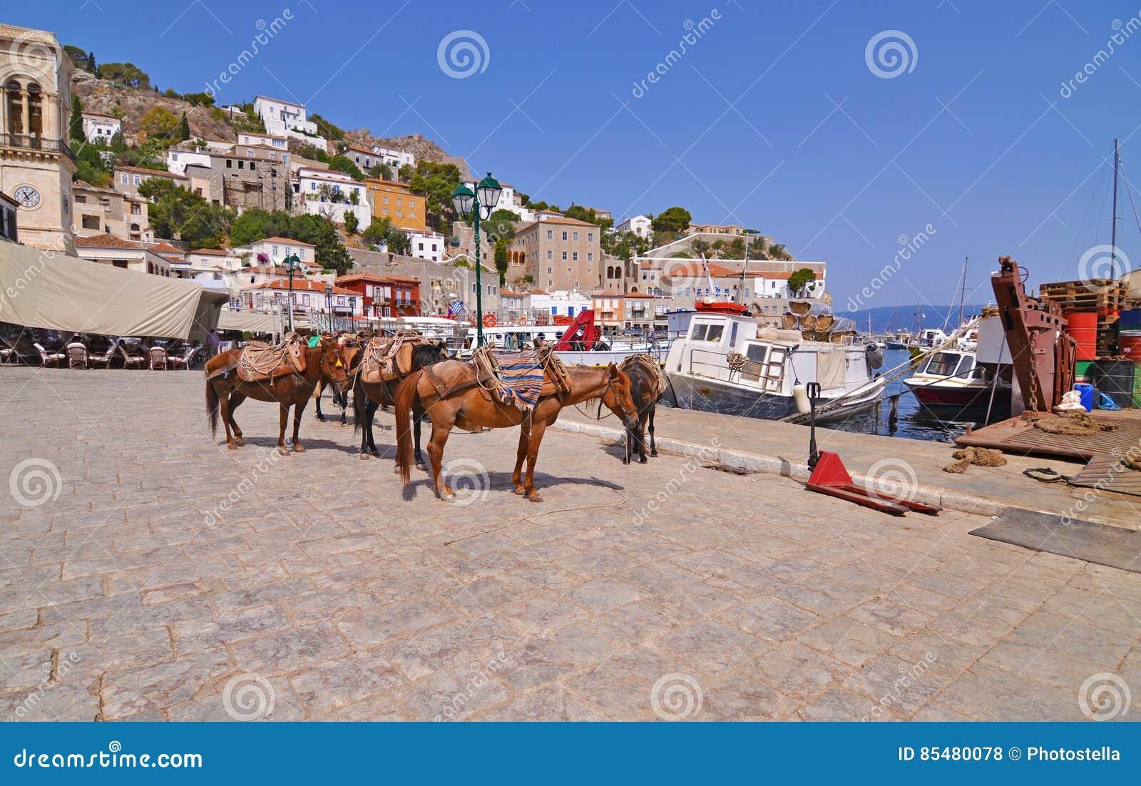 Asini al golfo Grecia di Saronic dell isola della hydra