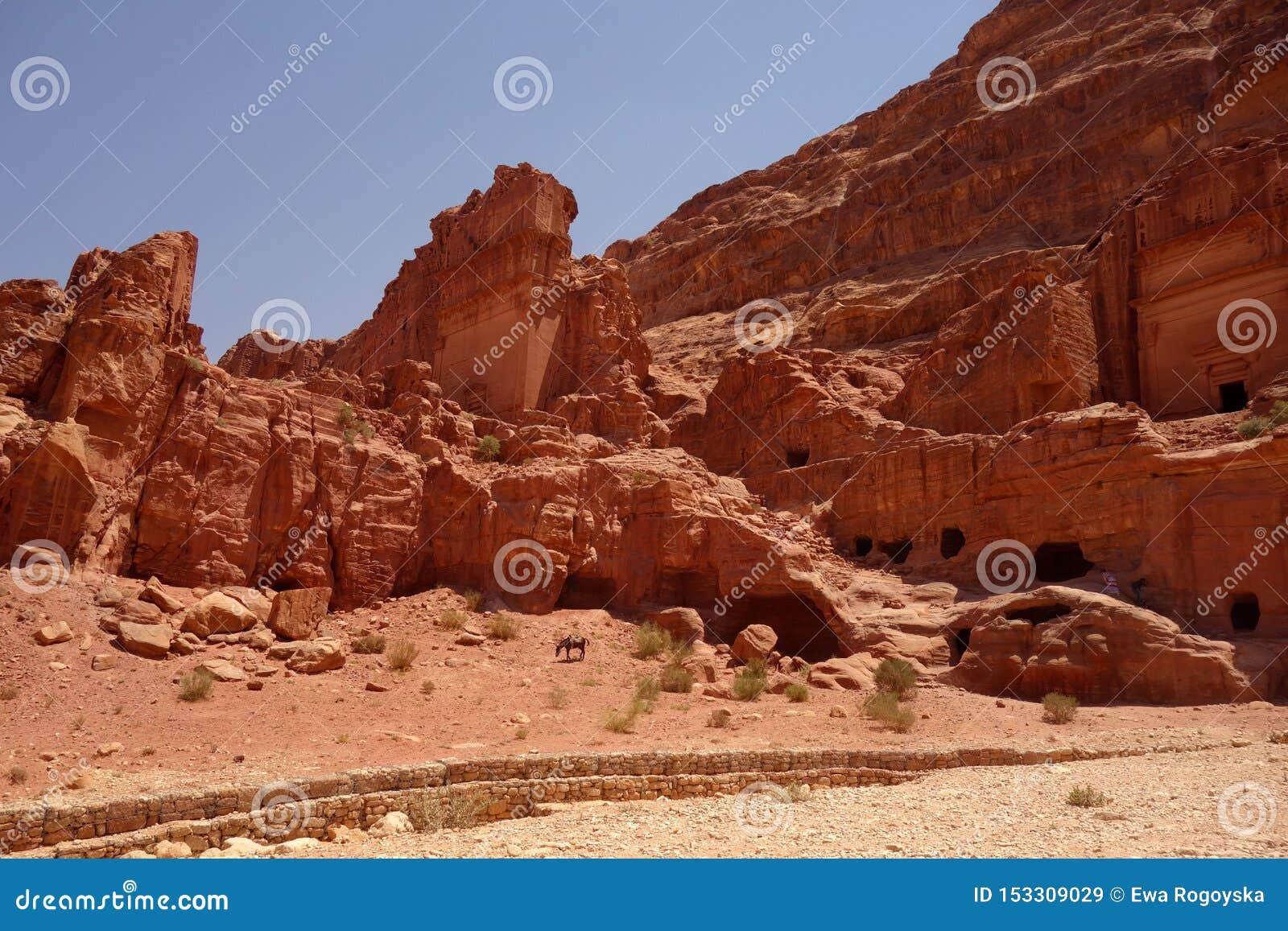 Asino in Petra Jordan