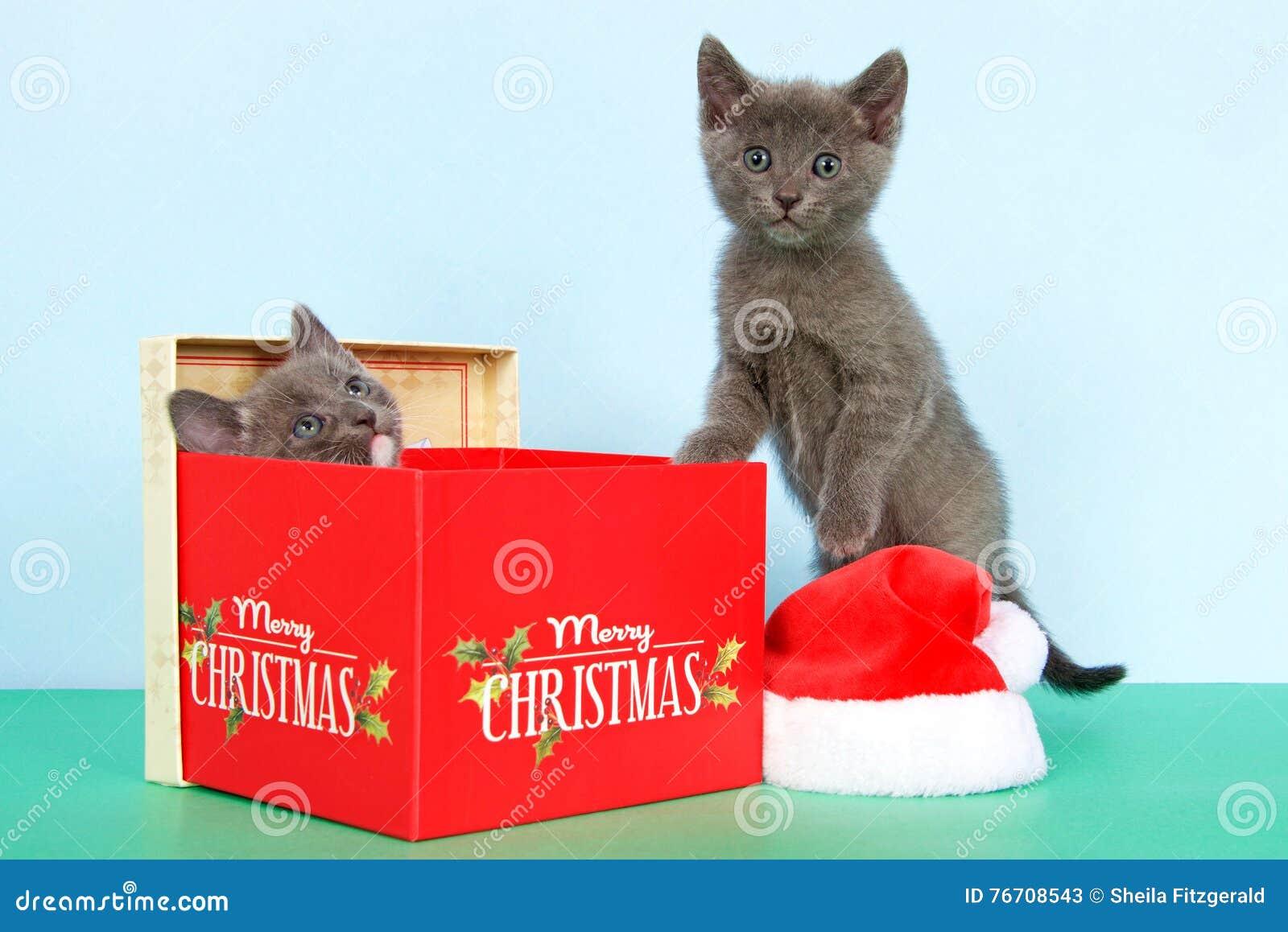 Ask för två grå kattungejul