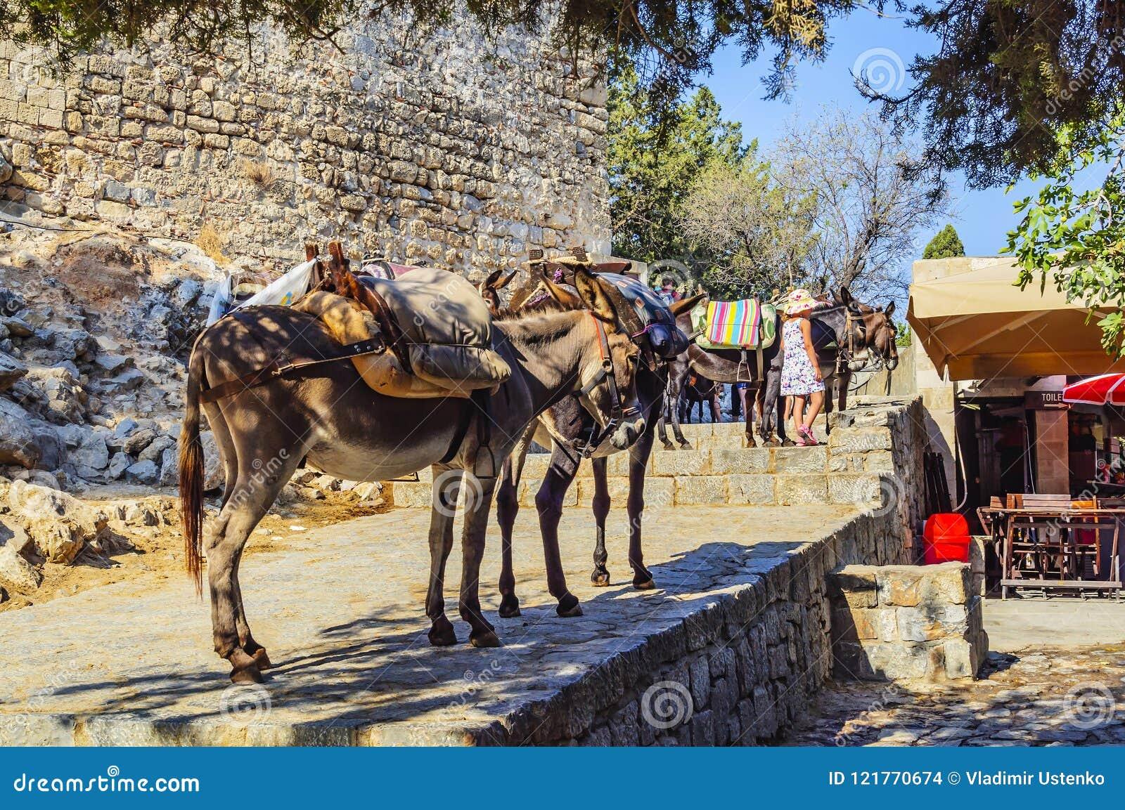 Asnos para transportar povos no ponto superior da acrópole de Lindos Console do Rodes, Greece
