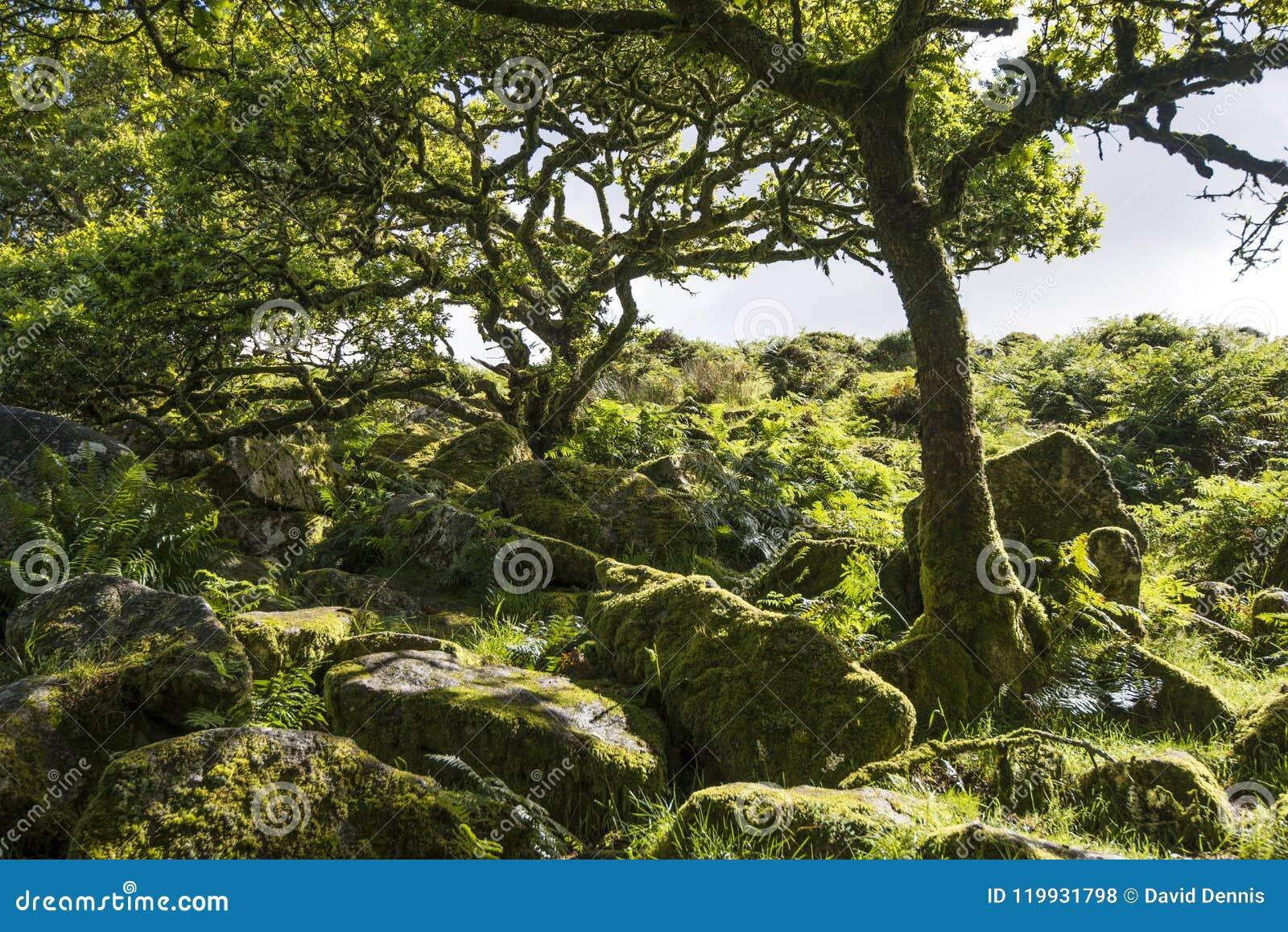 Aspecten van het Hout van Wistman ` s - een oud landschap op Dartmoor, Devon, Engeland