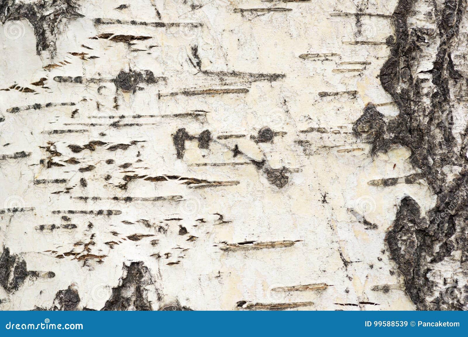 Aspen Bark Background
