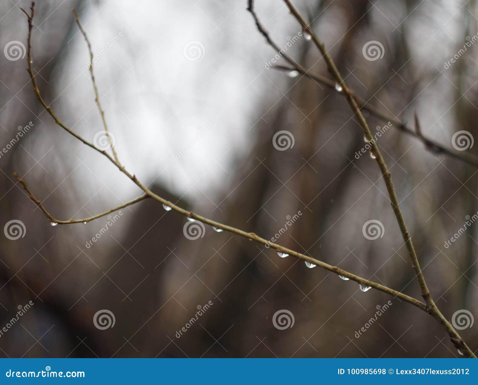 Aspen branches.