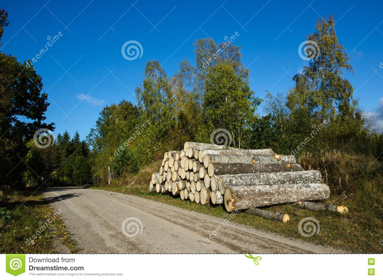Aspen Timber Stack By Roadside Stock Image - Image of