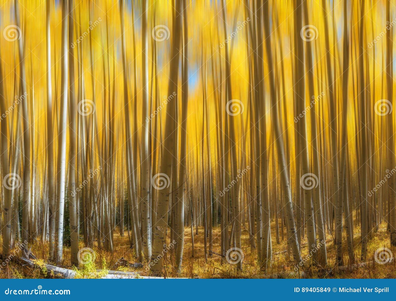 Aspen Tree Abstract Motion Blur amarelo