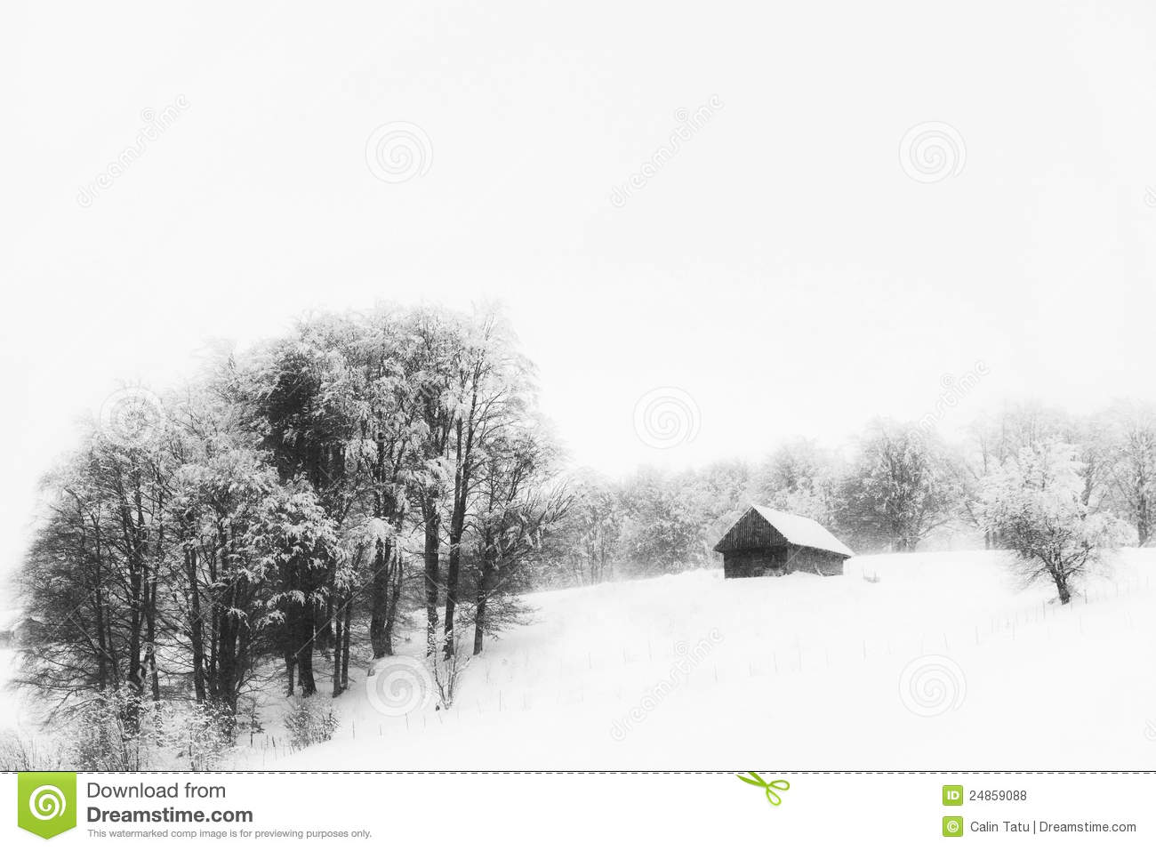 Birch trees in the winter stock photo image 2170700 - Aspen Trees And Old Cottage In Winter Royalty Free Stock Photos