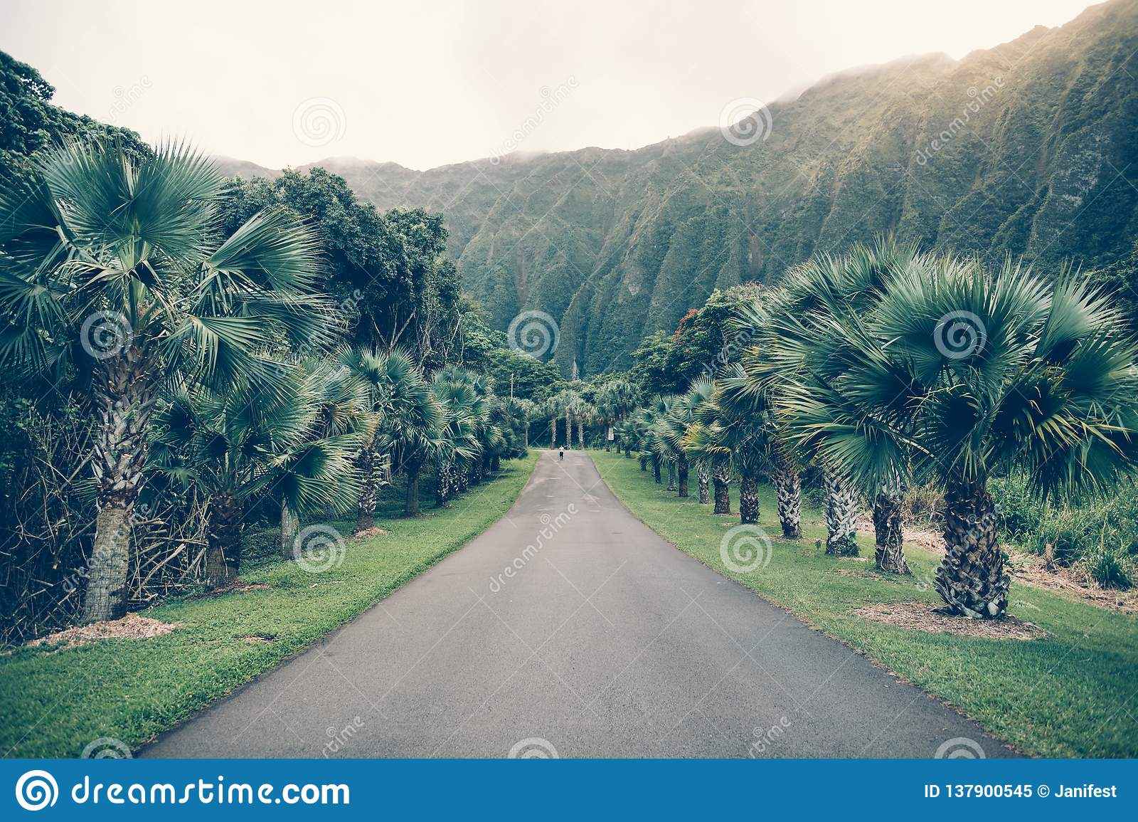 Asphalt Tropical Road With Palm And Mountains In Hawaii Ho