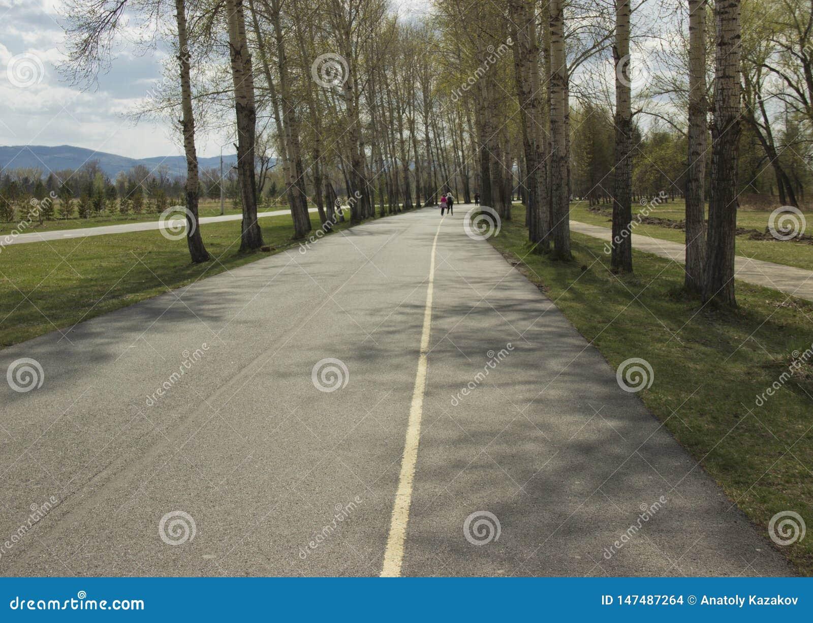 Asphaltez le chemin entre les arbres