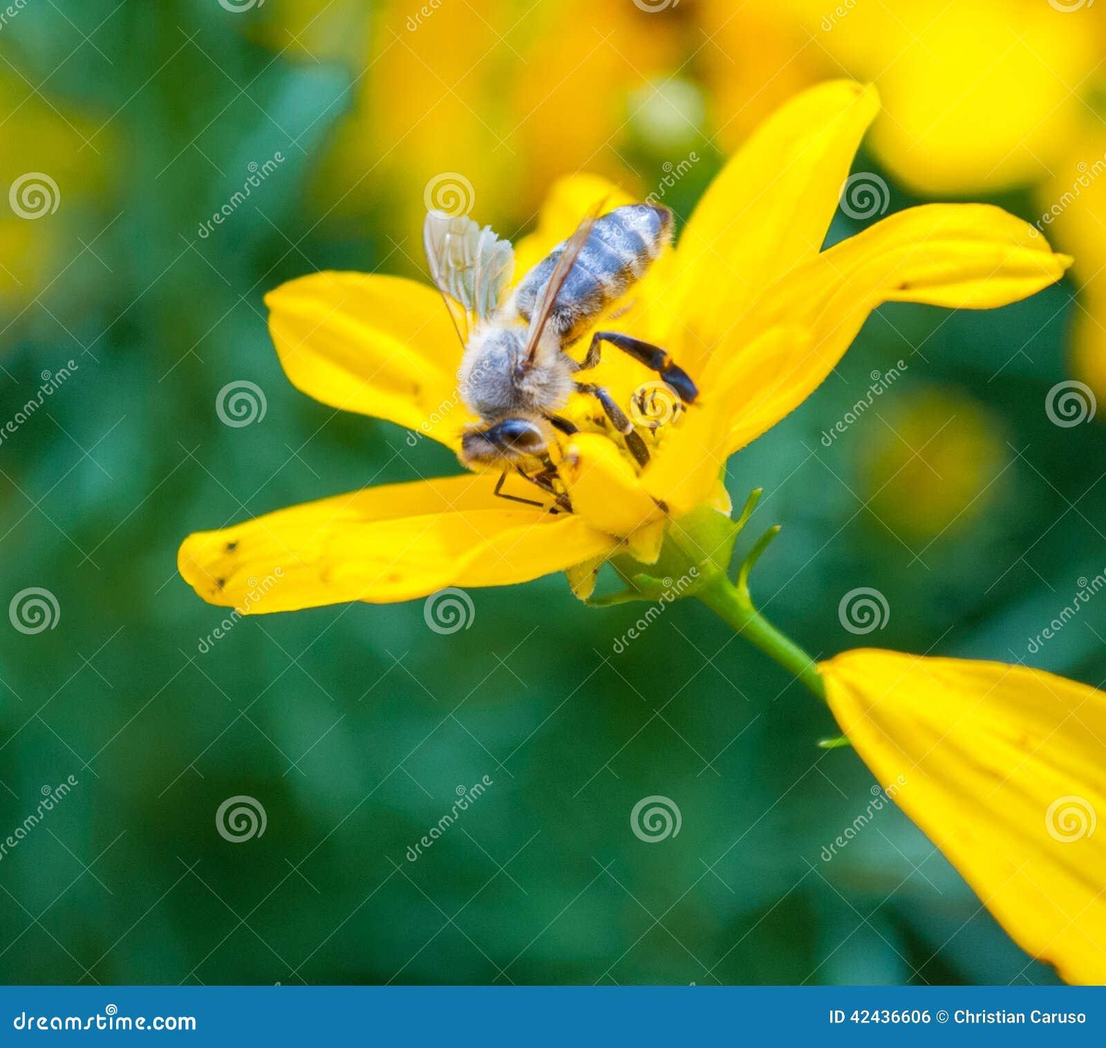 Aspirar el néctar