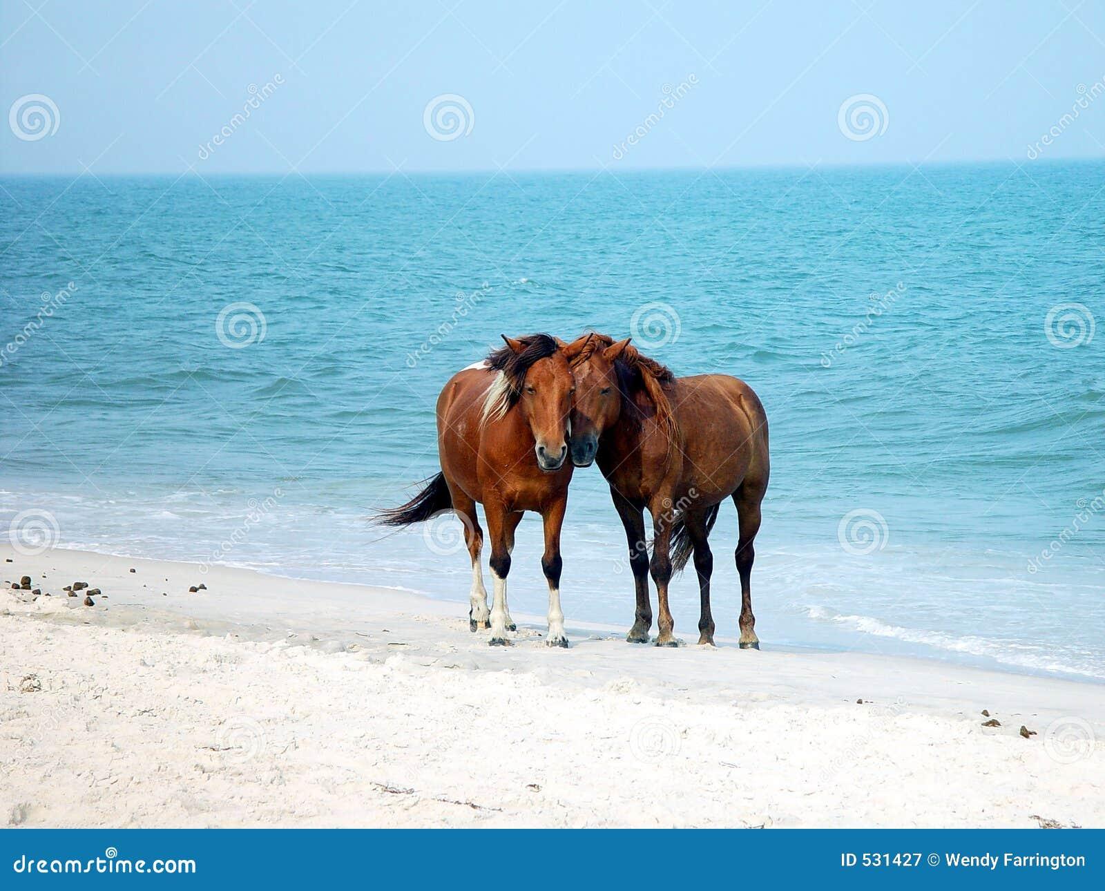 Download Assateague小马 库存图片. 图片 包括有 小马, 火箭筒, 海洋, 沙子, 水管, 海岛 - 531427