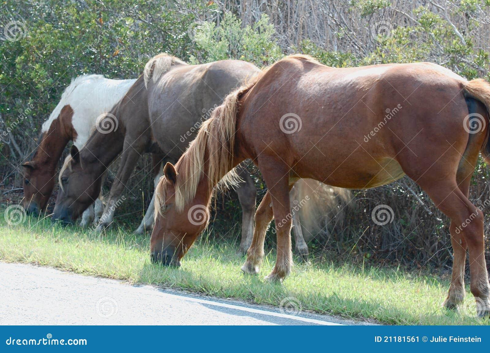 Assateague Wild Pony Family