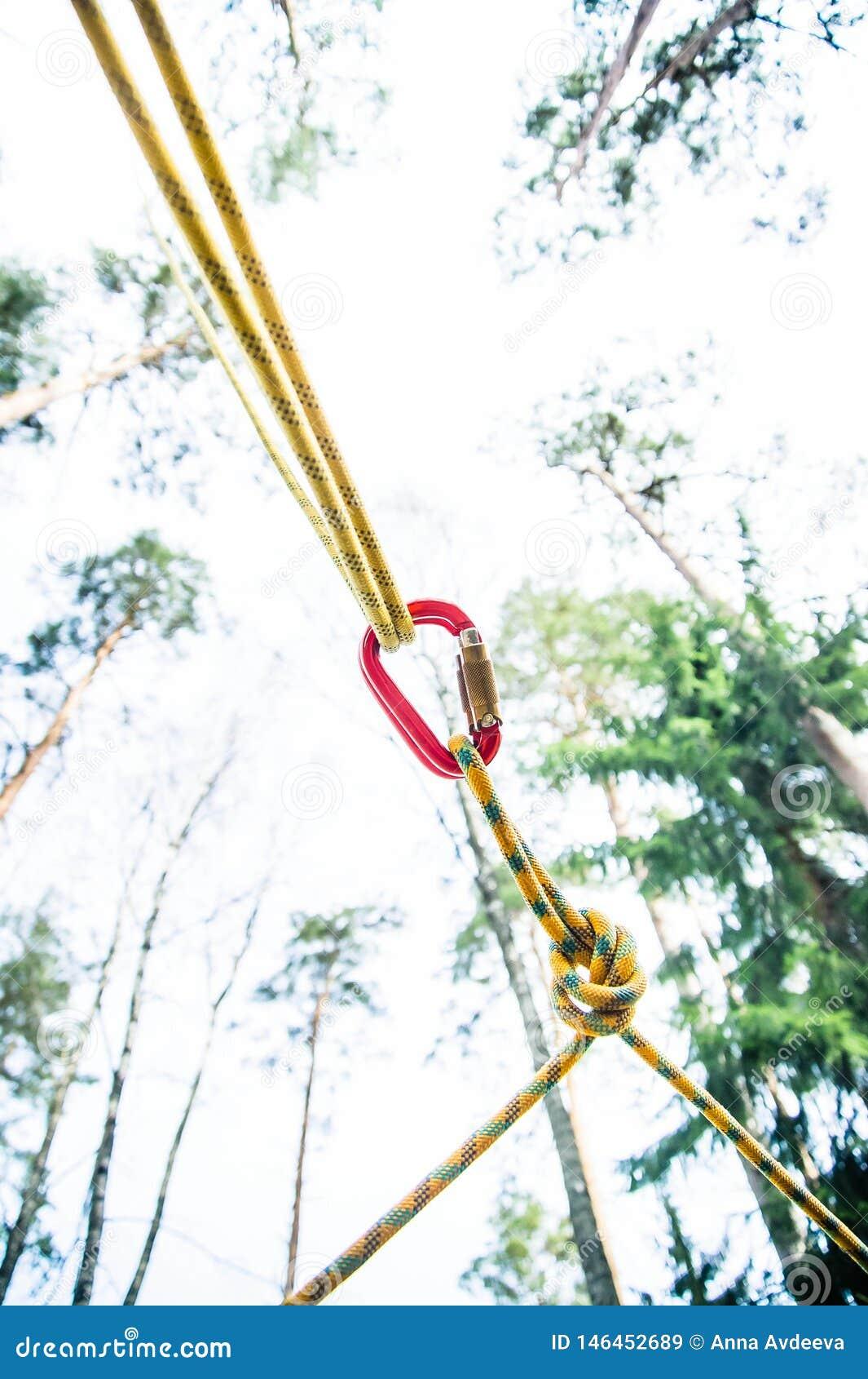 Asseguração segura da corda entre árvores ao carabiner de escalada