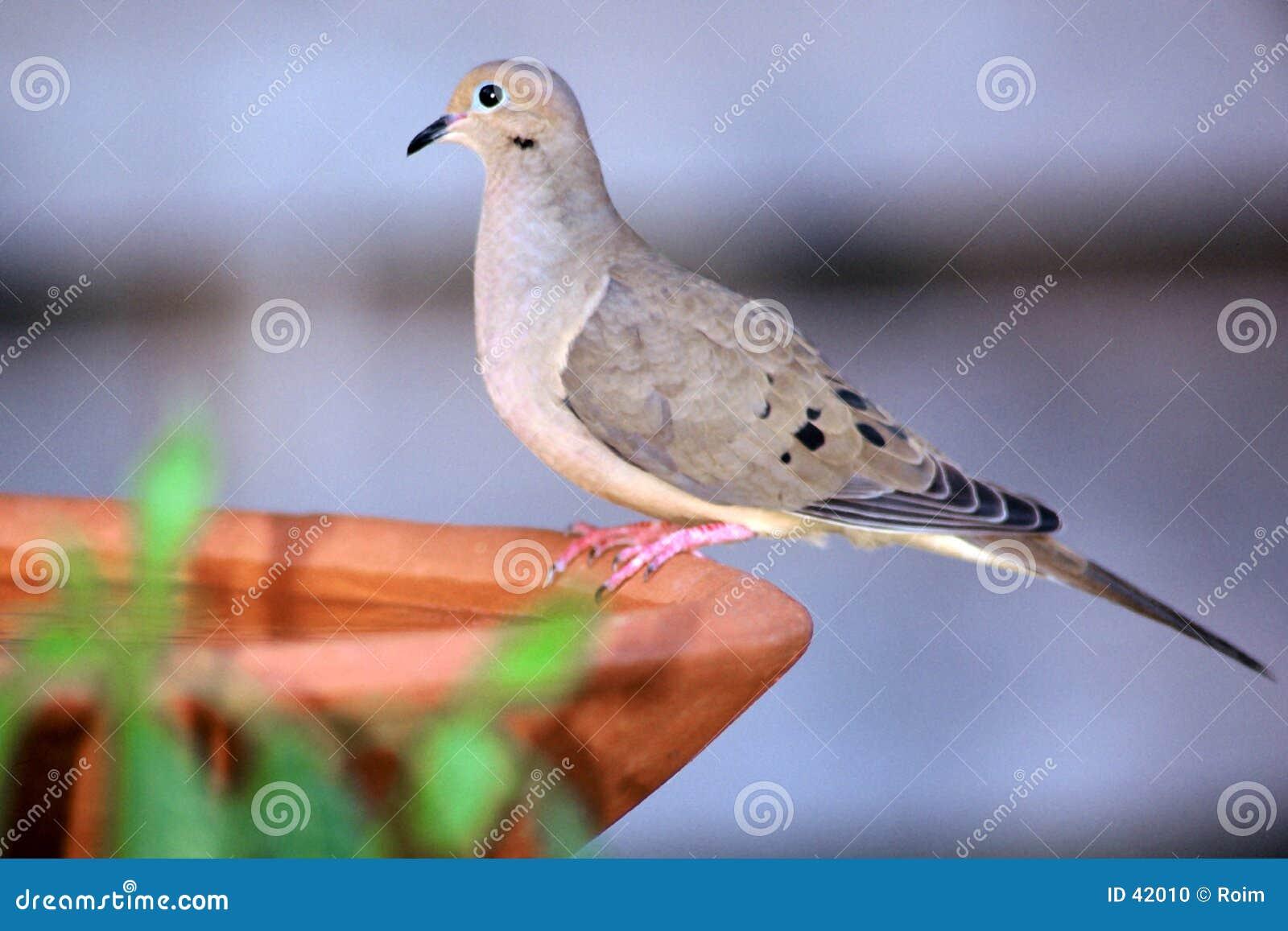 Assento no banho do pássaro