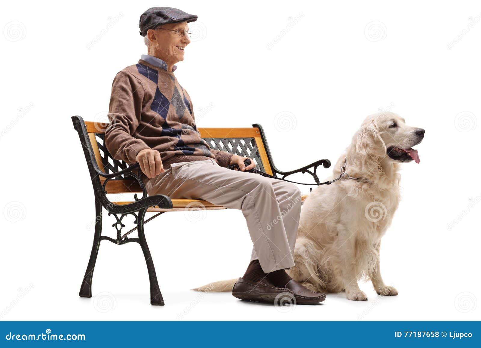 Assento superior em um banco com seu cão