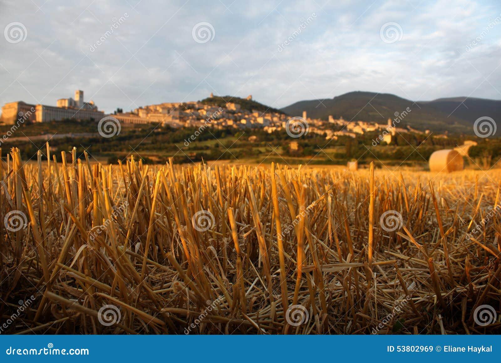 Assisi Behind Straws