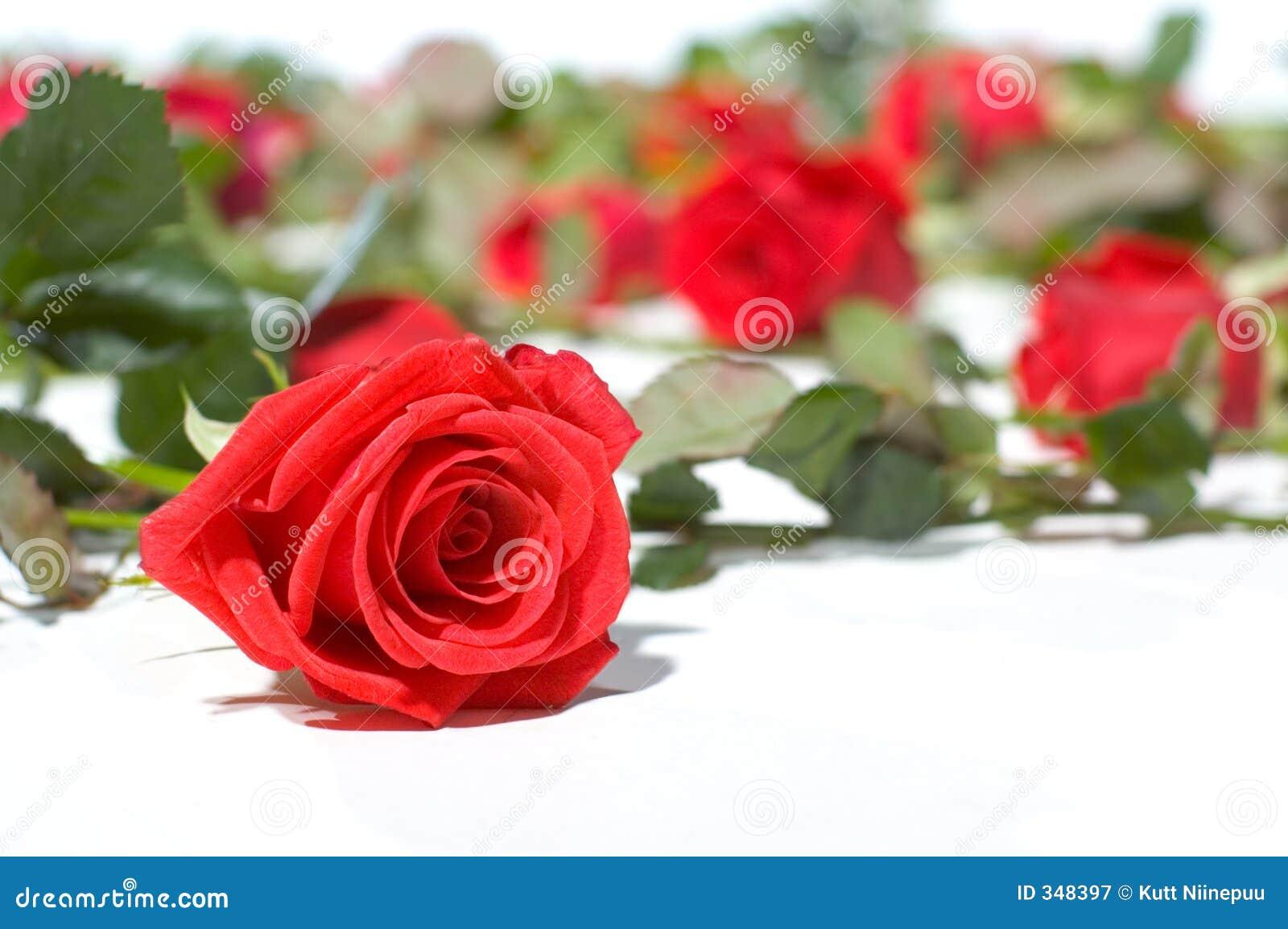 Assoalho completamente das rosas