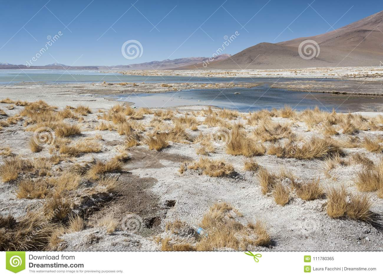 Associação da mola quente de Laguna y Termas de Polques com Salar de Chalviri no fundo, Salar de Uyuni, Potosi, Bolívia