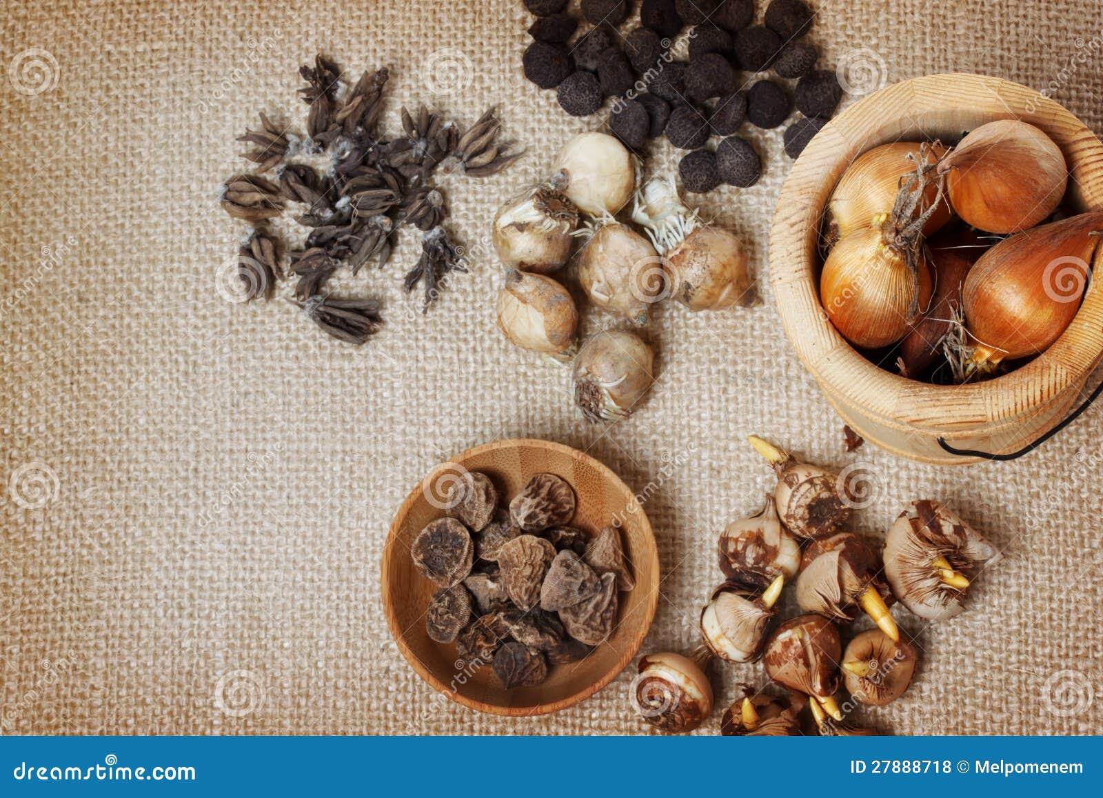 Анемона корончатая: проращивание, посадка и уход 89