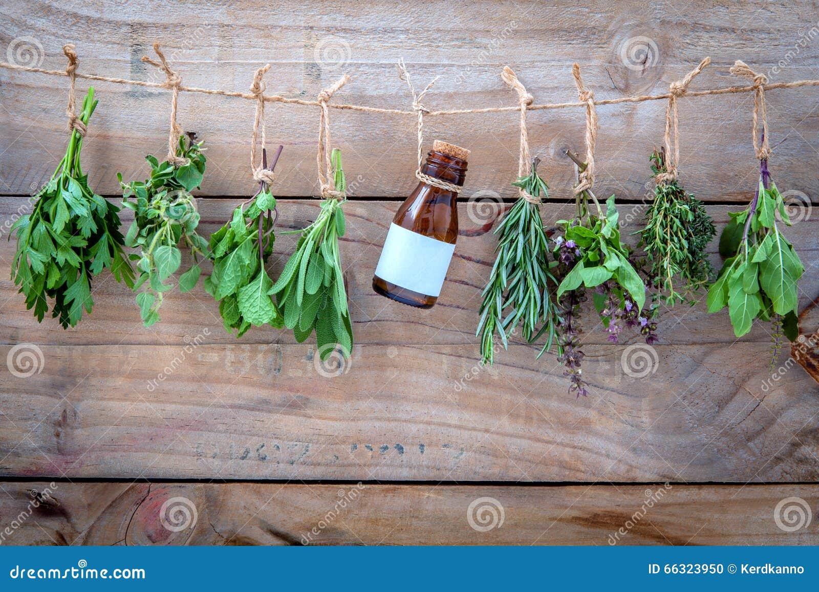 Assorted hängende Kräuter, Petersilie, Oregano, Minze, Salbei, Rosmarin, swee