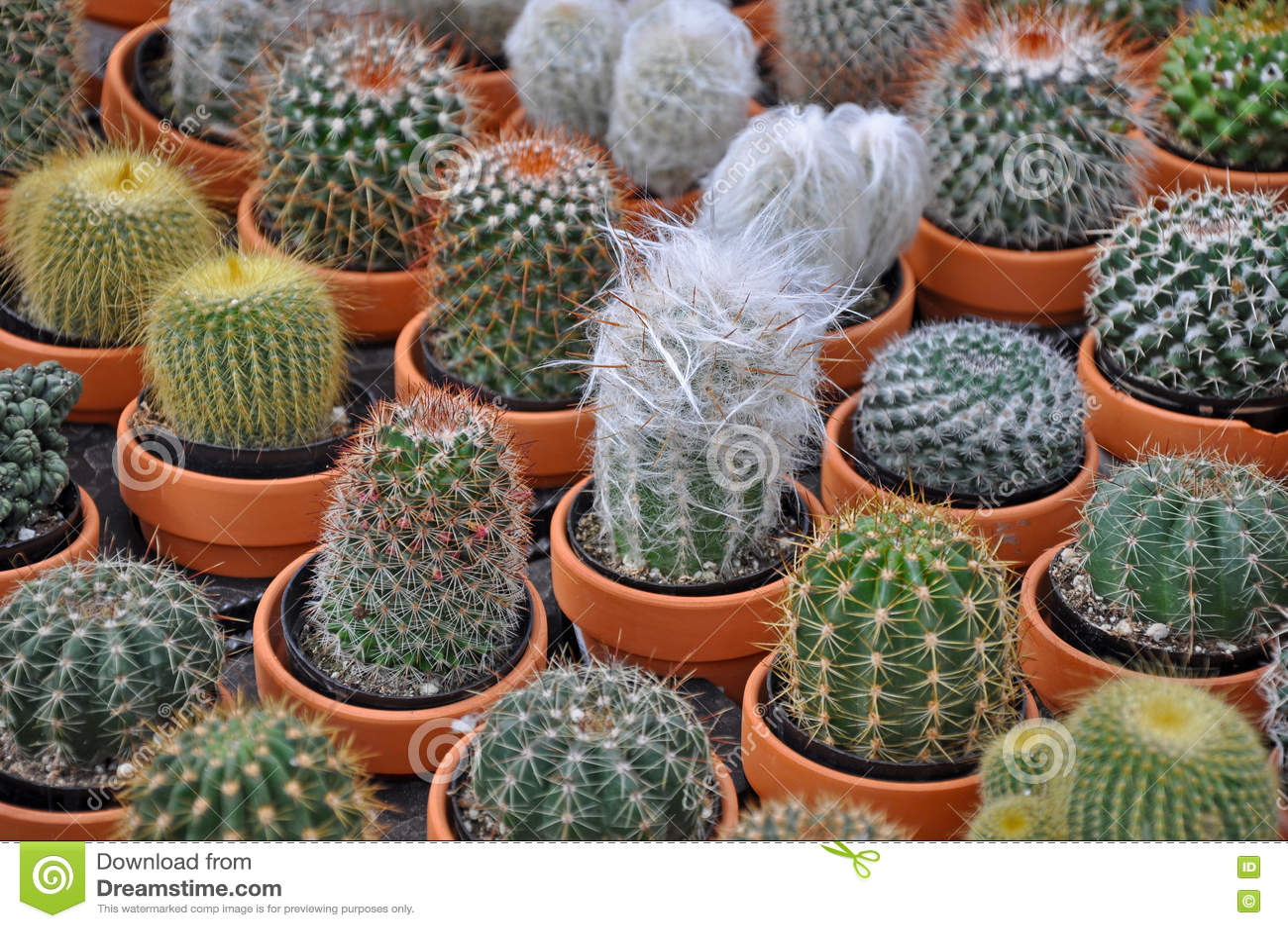 assorted cacti planter royalty free stock image. Black Bedroom Furniture Sets. Home Design Ideas