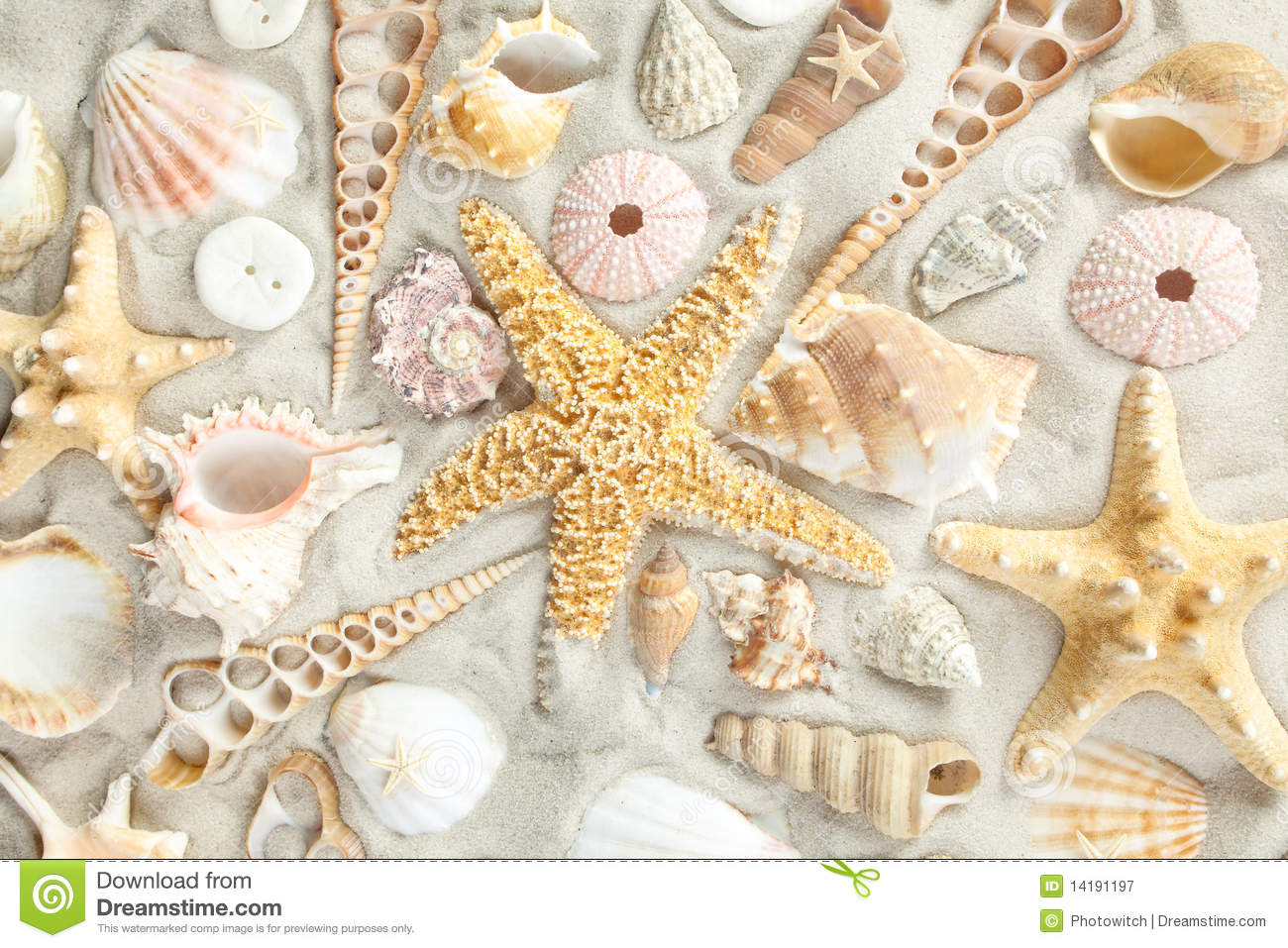 assorted seashells stock image image of background seashell