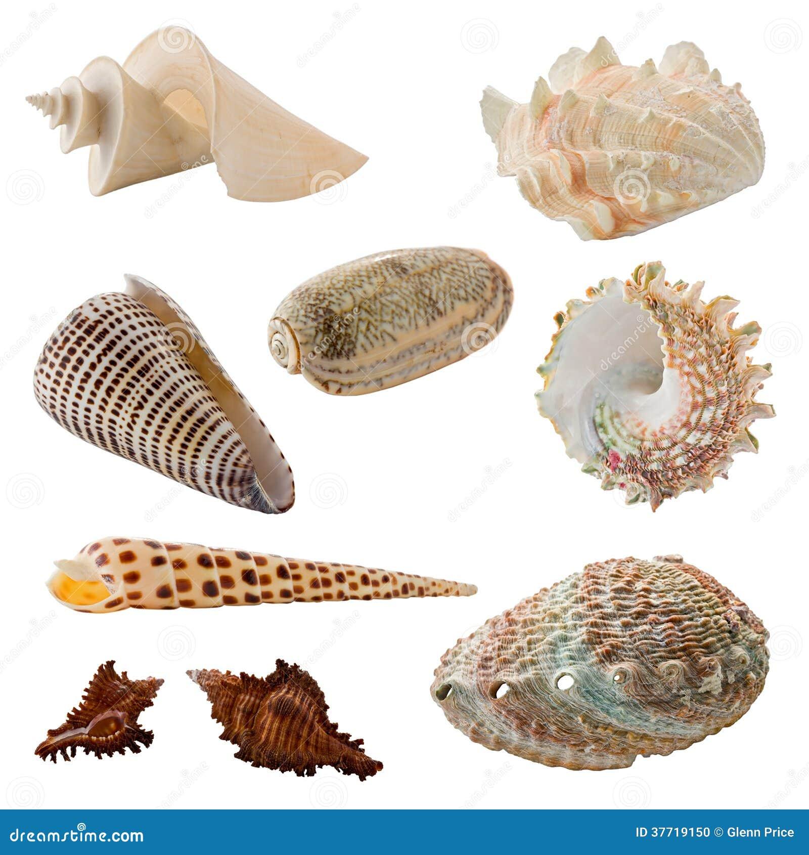 assorted seashells stock photo image 37719150