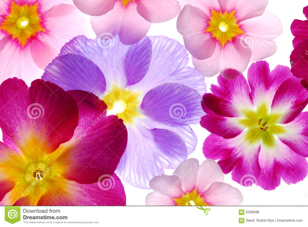 Assorted Spring Flowers