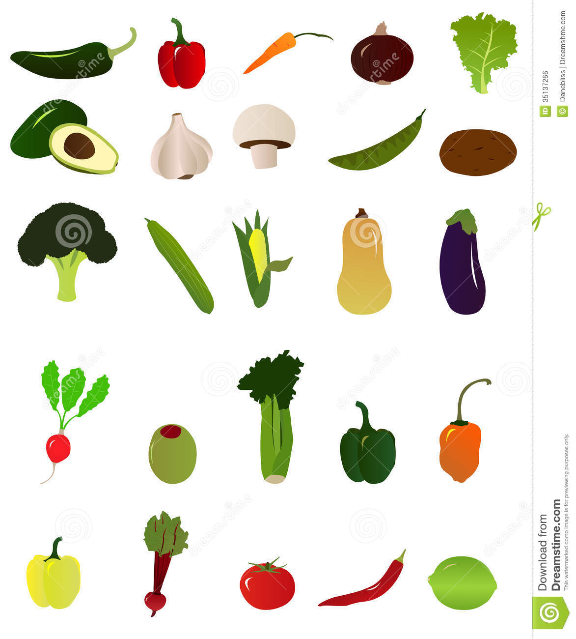 Multiple assorted vegetables shown in a vector illustration.