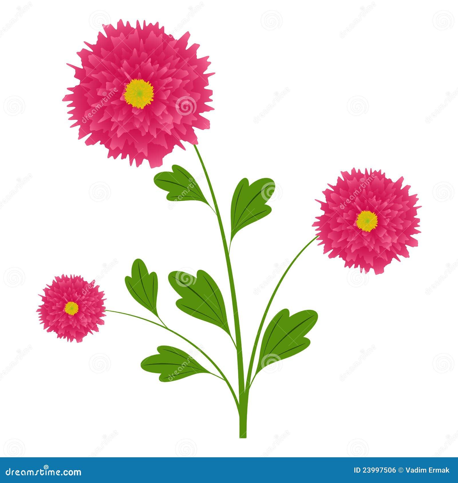 Aster immagine stock libera da diritti immagine 23997506 - Aster pianta ...
