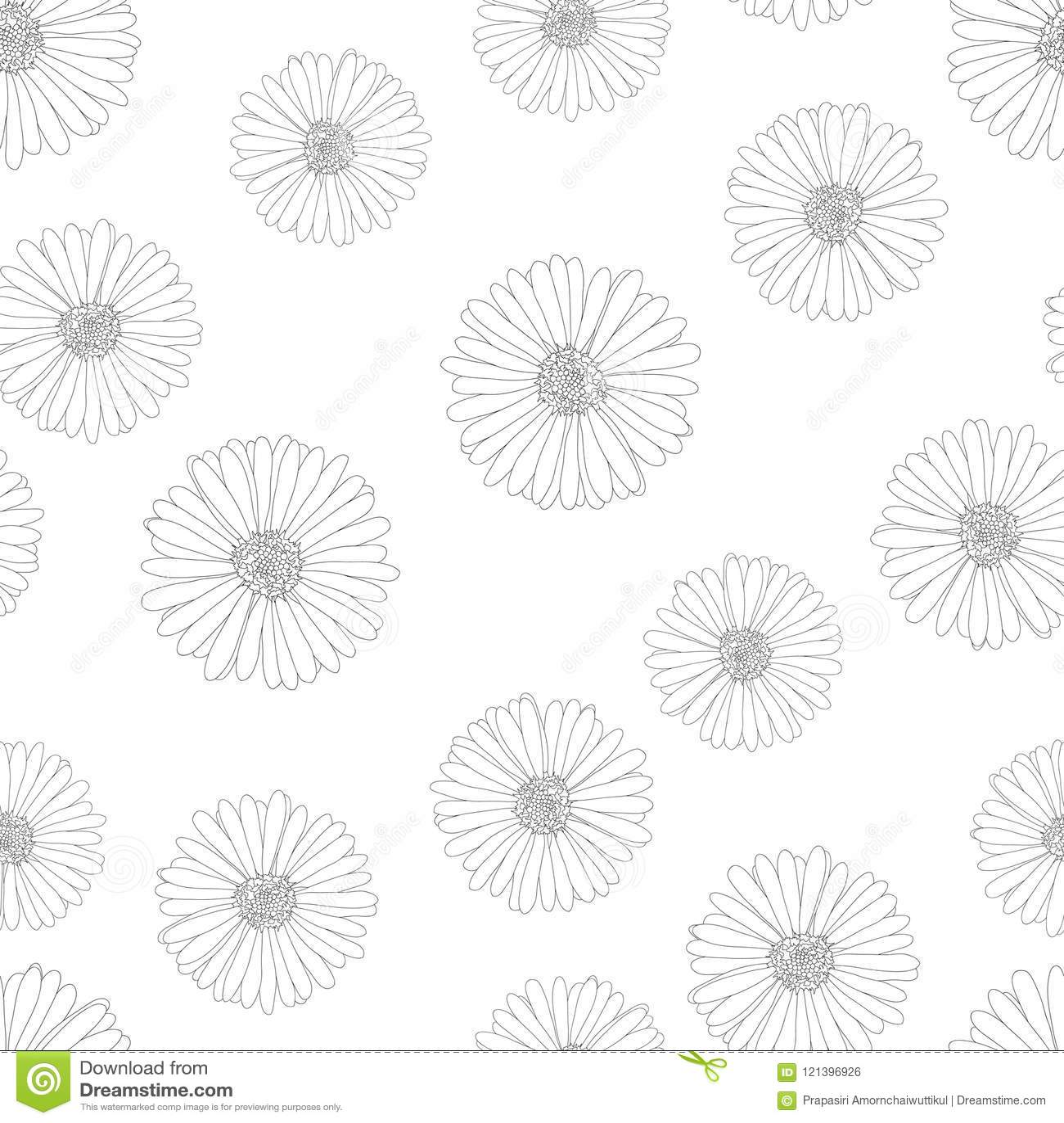 Aster Daisy Flower Outline Seamless Background Vector Illustration