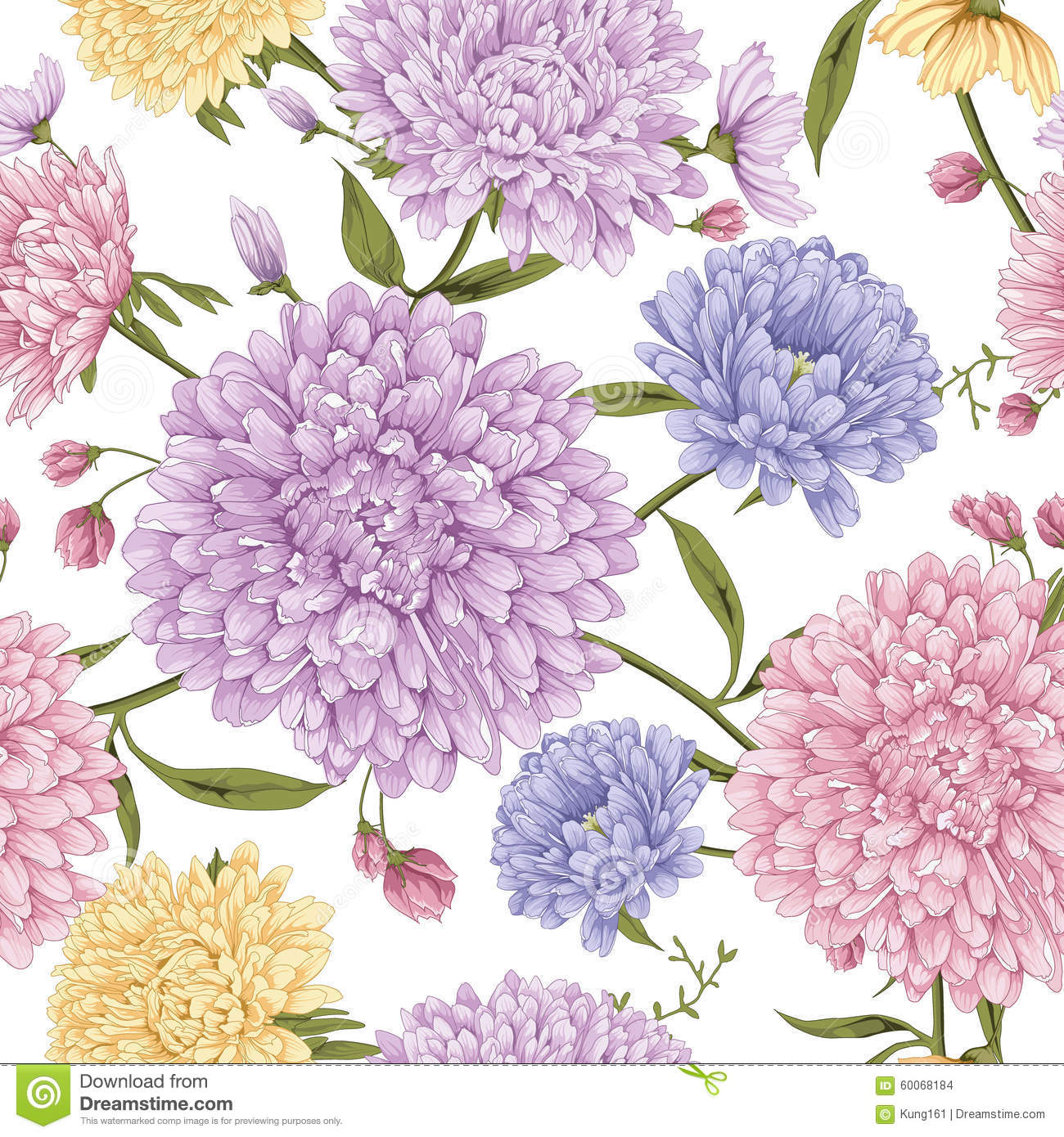 Aster Flower With White Background Stock Vector Illustration Of