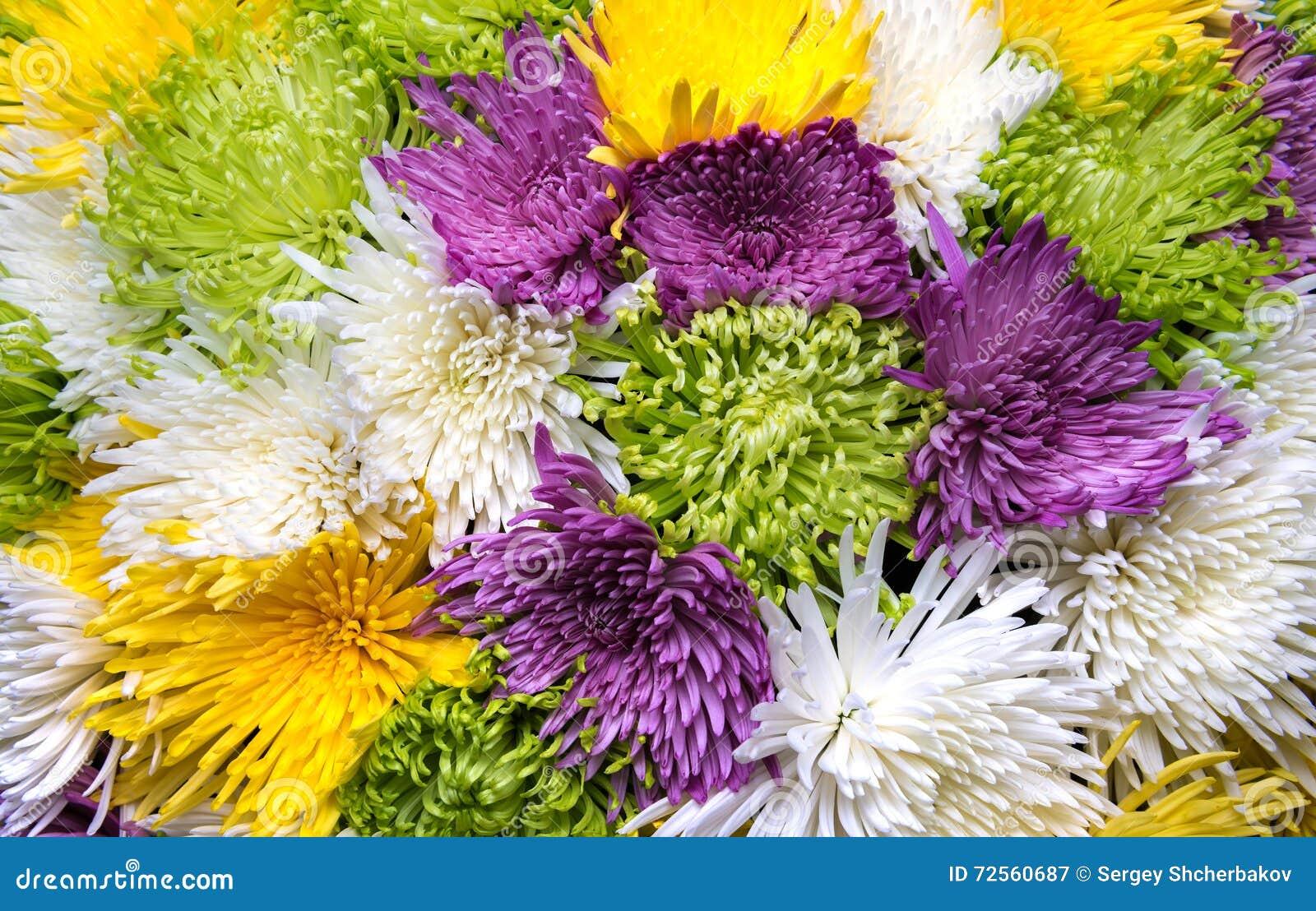 Aster flowers bouquet closeup stock image image of closeup autumn aster flowers bouquet closeup izmirmasajfo