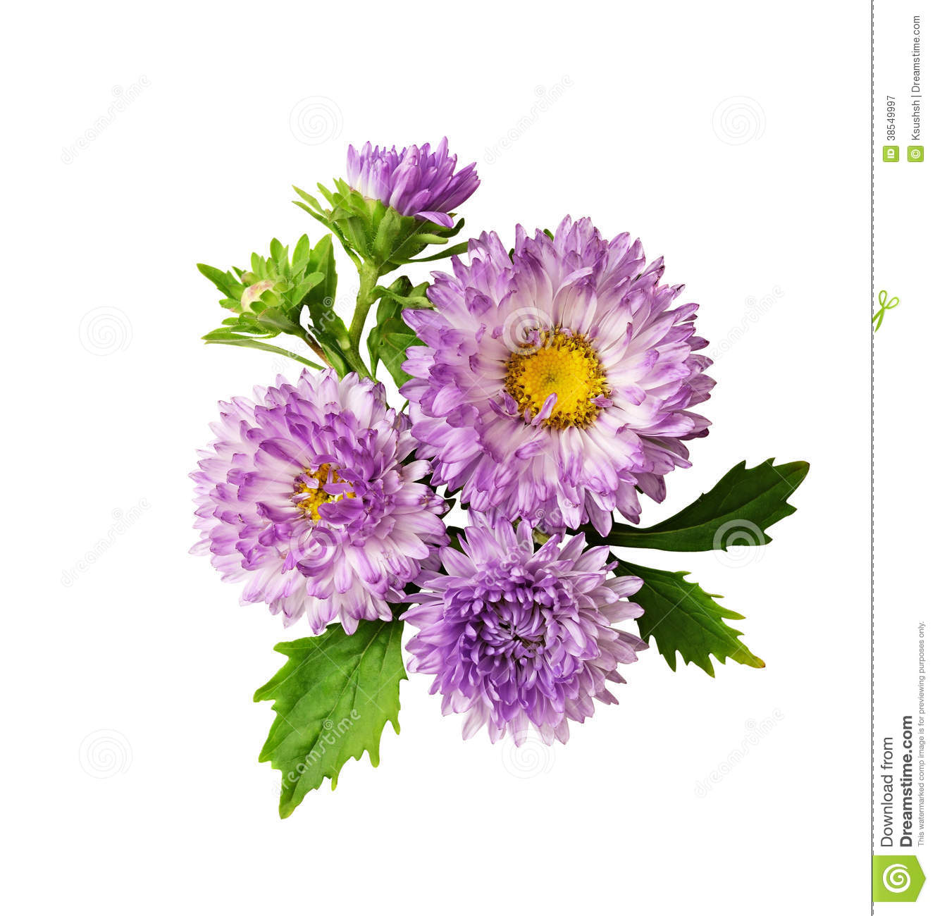 essay on aster flower New and upcoming essays  and a warped sense of beauty like his master  in japan it is a luxury to have a whole tree for yourself when you picnic in the flower.