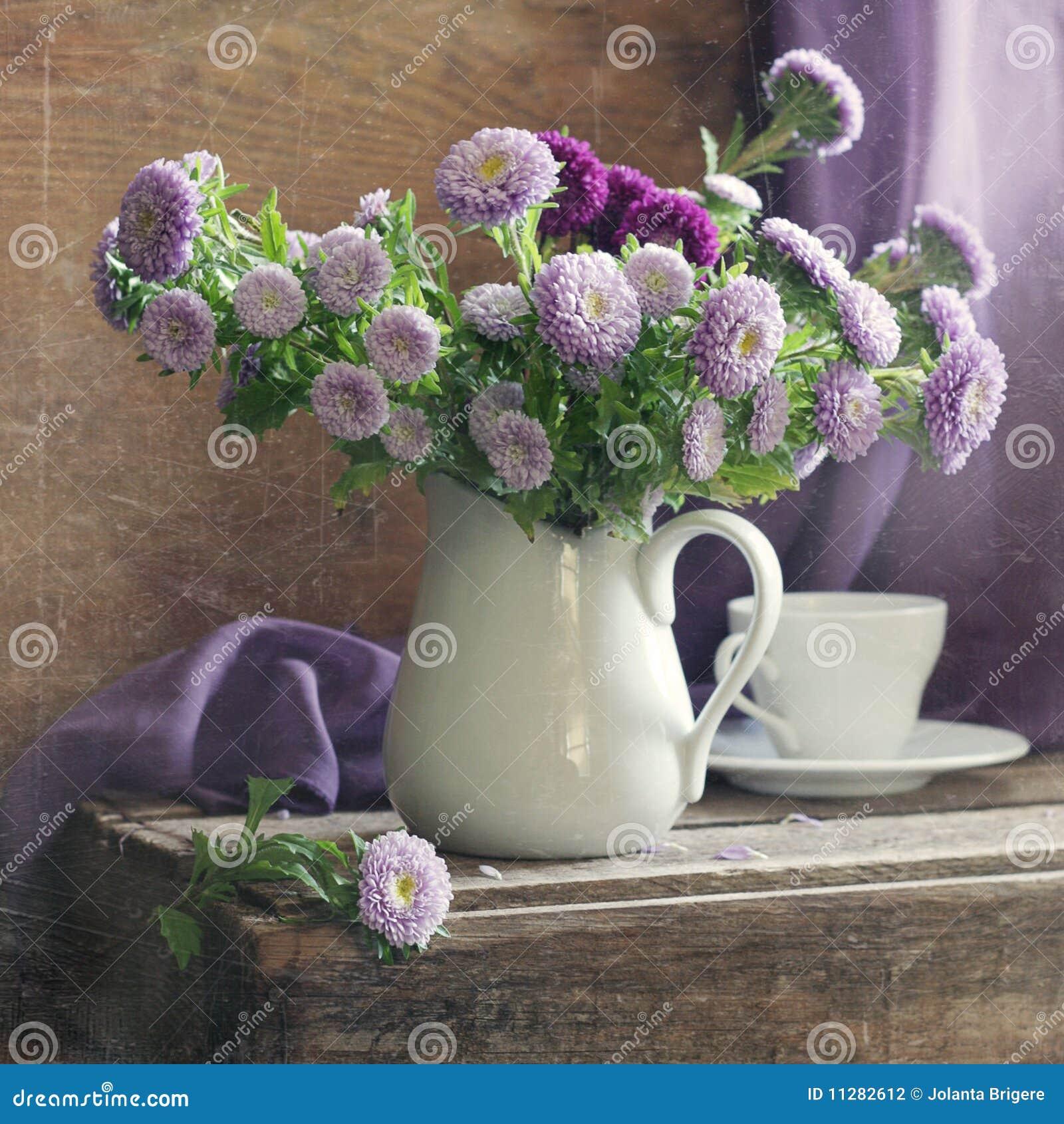 Asteres de la lila