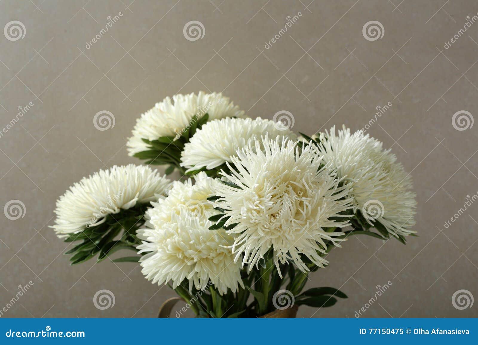 Asters de bouquet contre le mur en béton