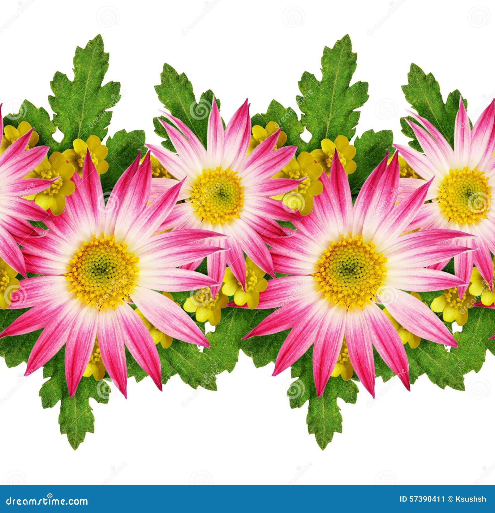 Asters en wild bloemenpatroon