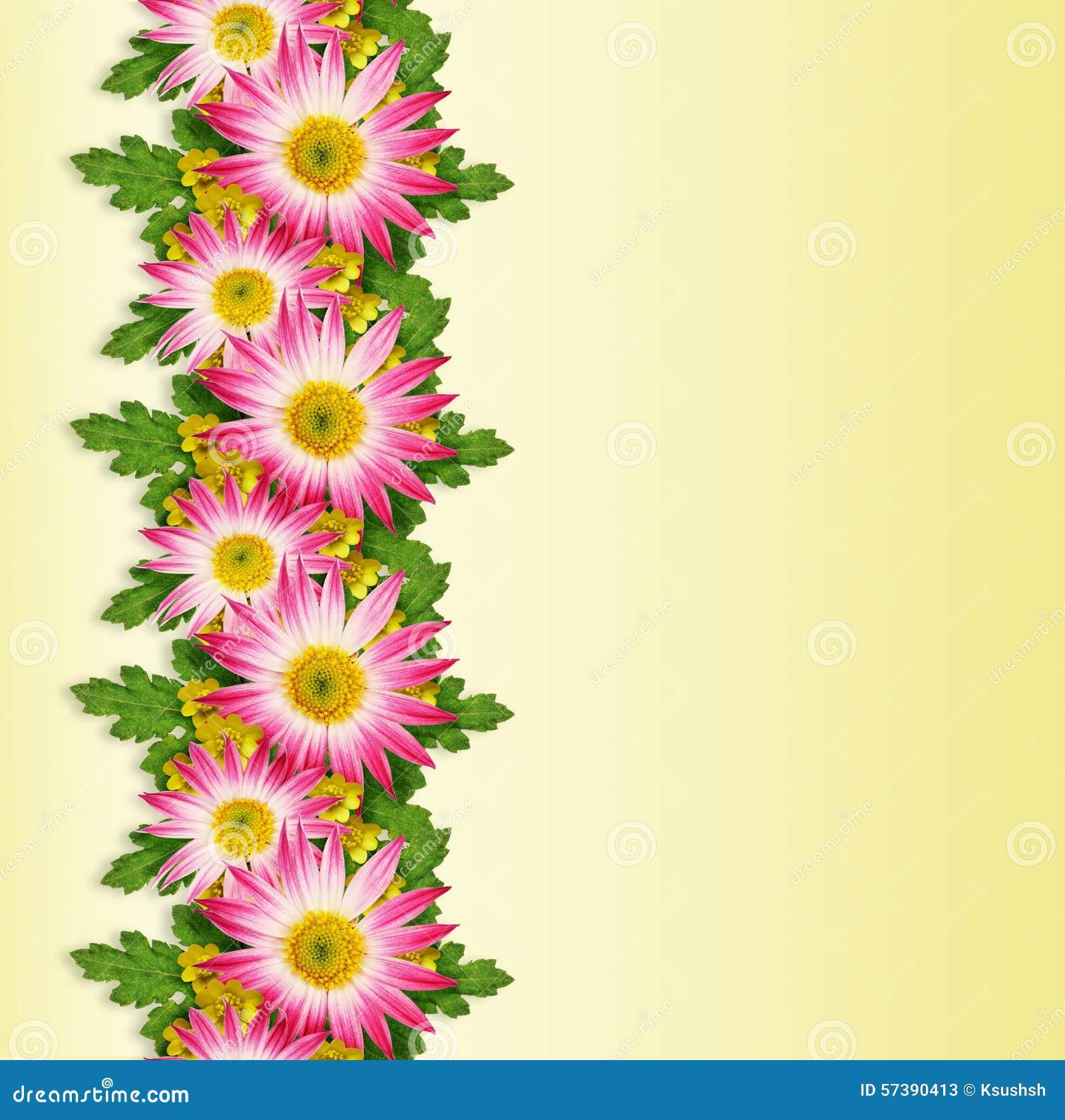 Asters et ligne de fleurs sauvages photo stock image for Ligne de fleurs