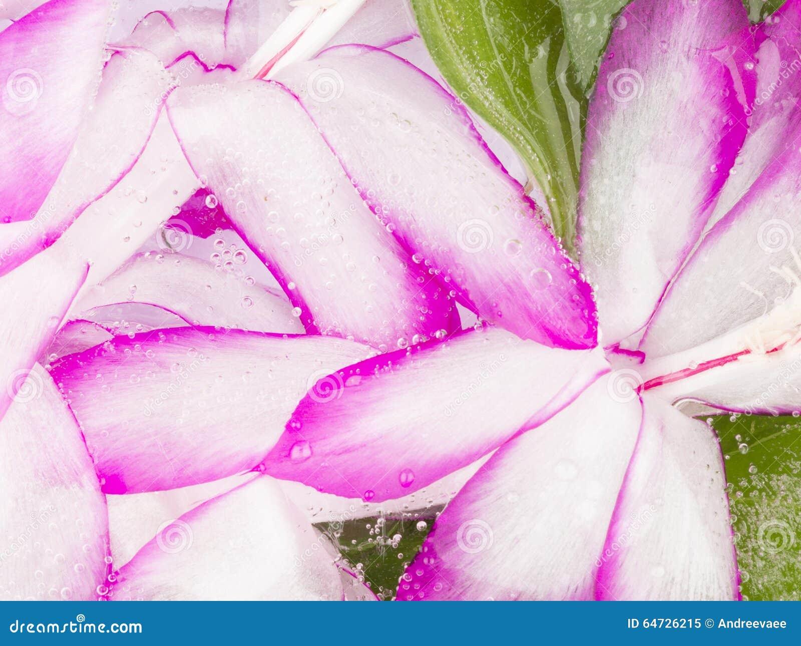 Astrazione con il fiore congelato