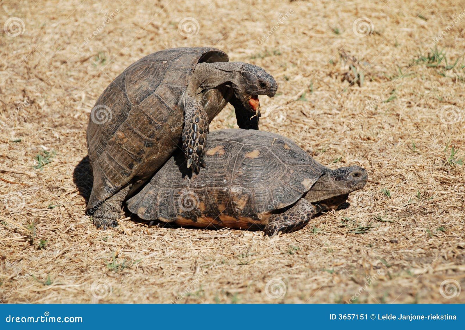 Ath中心夫妇喜爱做乌龟