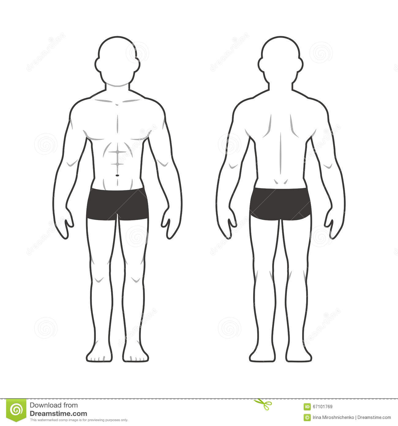 Athletic Male Body Chart Stock Vector Illustration Of Medical