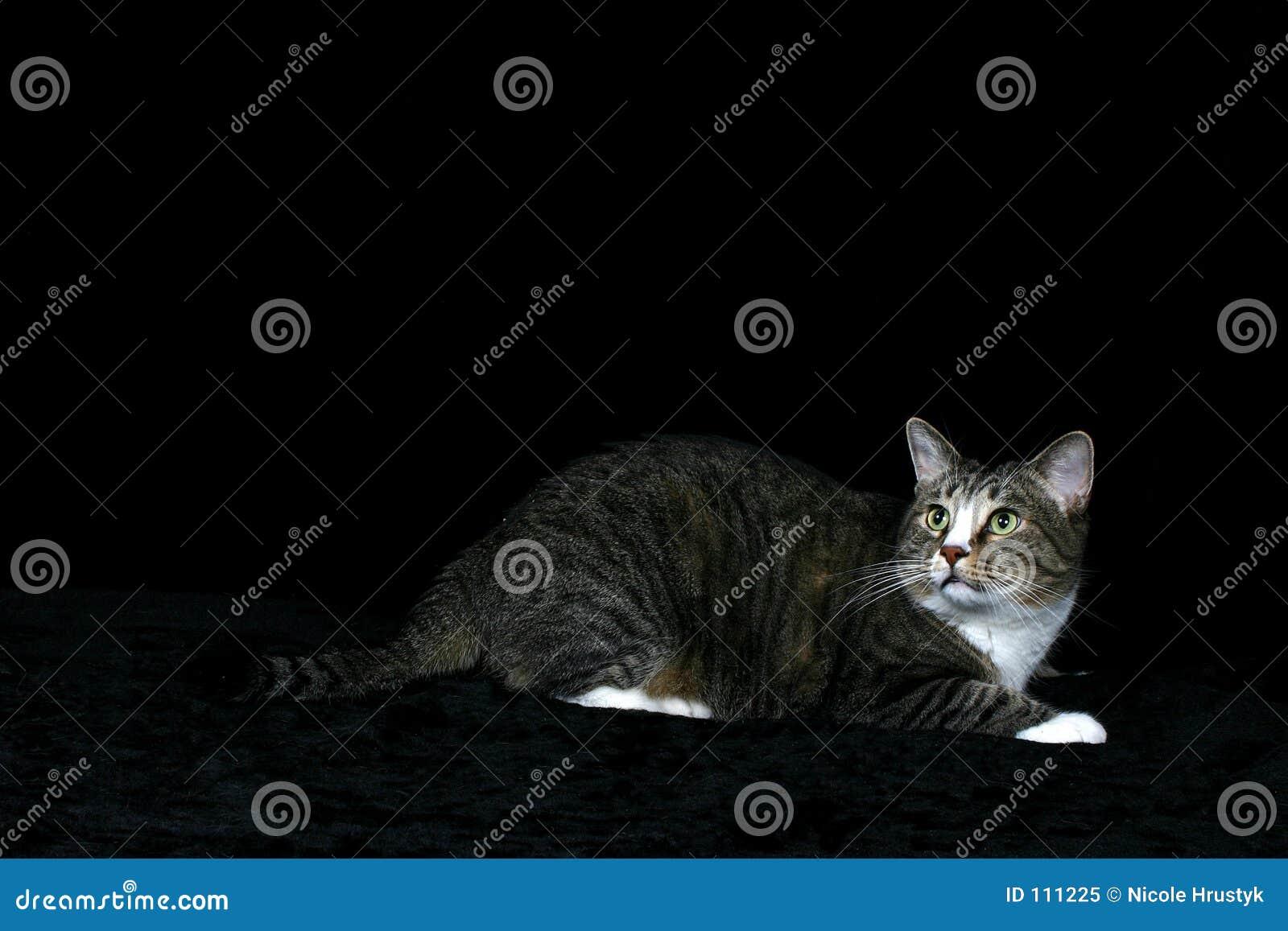Atitude grande do gato grande