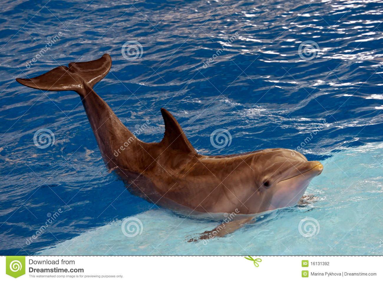 dolphin show download