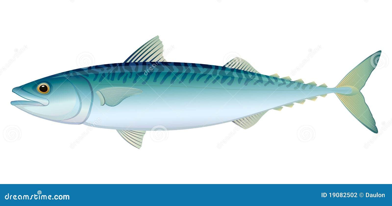 atlantic mackerel stock photography image 19082502 Sailfish Art sailfish clipart black and white